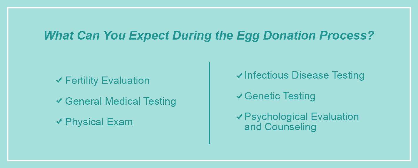 what can you expect during the egg donation process